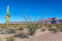 Palm Canyon, Kofa NWR