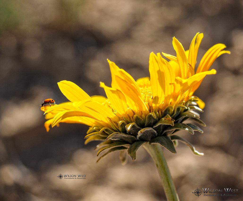Sunray and Ladybug